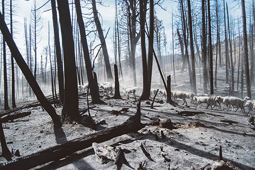 stump-grinding-south-fallen-tree
