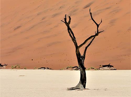 stump-grinding-south-lake-leafless-tree